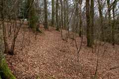 Stiforløb-under-de-gamle-bøgetræer