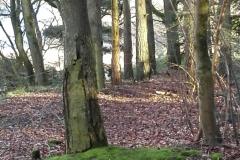 Langs-skrænt-i-skoven